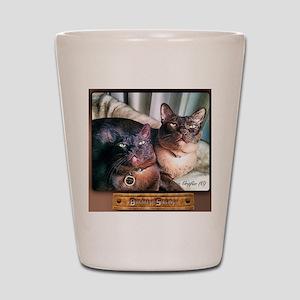 Burmese cat siblings, 2 Shot Glass