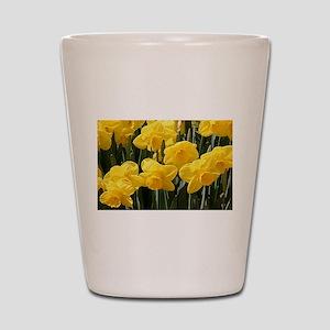 Daffodil flowers in bloom in garden Shot Glass