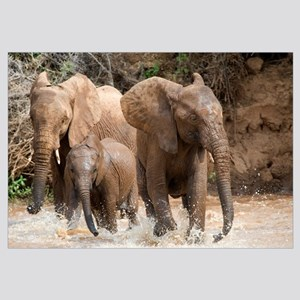 African elephants (Loxodonta africana) playing wit