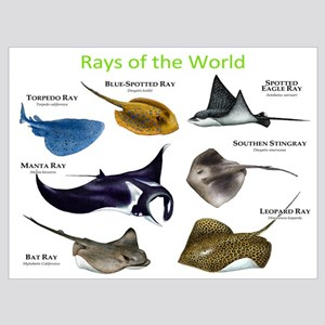 793d5c75c Manta Ray Wall Art - CafePress
