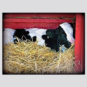 Cow Photo Poster