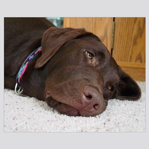 Chocolate Lab Thoughts