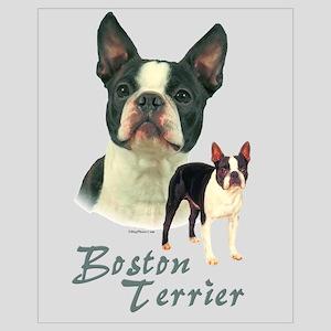 Boston Terrier-2