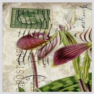 vintage french botanical orchid
