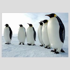 Lined up Emperor Penguins