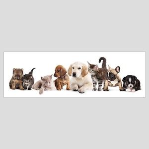 Cute Pet Panorama Wall Art