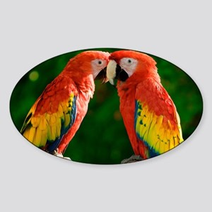 Beautiful Parrots Sticker