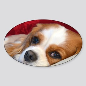 Blenheim Cavalier King Charles Span Sticker (Oval)