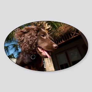 Boykin Spaniel Puppy Sticker (Oval)