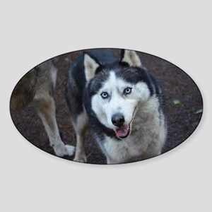 Blue Eyed Husky Sticker (Oval)