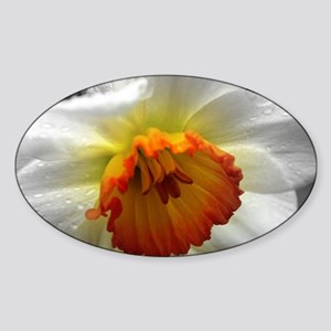 Daffodil Umbrella Sticker