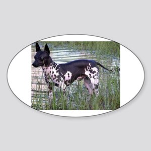 american hairless terrier full Sticker
