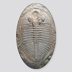 Trilobite fossil Sticker (Oval)