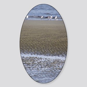 Sea Gulls in a Sound Sticker (Oval)
