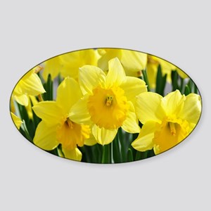 Trumpet Daffodil Sticker (Oval)