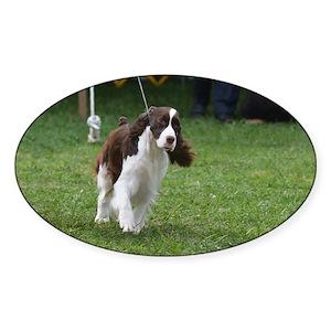 Springer Spaniel Dog Sticker (Oval)