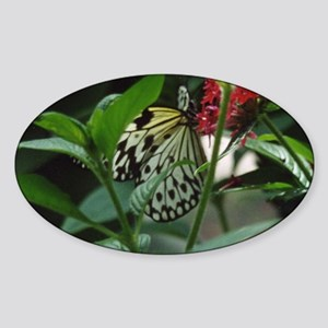 Butterflies/Winged Creatures Oval Sticker