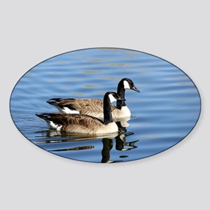 Two Canadian Geese On the calm blue Lake Water Sti