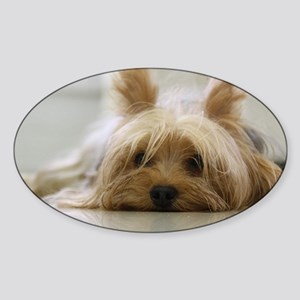 Yorkshire Terrier laying flat Sticker