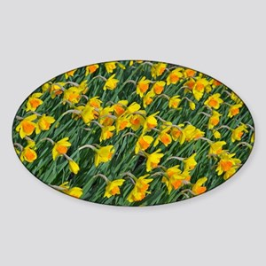 Bright yellow daffodils garden Sticker