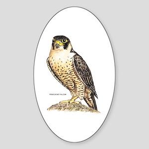 Peregrine Falcon Bird Sticker (Oval)