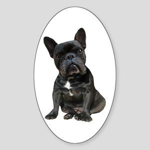 French Bulldog Puppy Portrait Sticker (Oval)