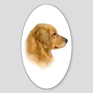 Golden Retriever Portrait Oval Sticker