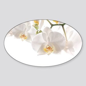 Orchids Reflection Sticker