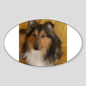 shetland sheepdog Sticker