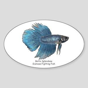 Blue Betta Splendens -Siamese Oval Sticker