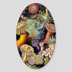 Antique 1904 Sea Anemone Nature Pri Sticker (Oval)