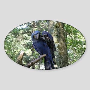 Blue Macaw in a Tree Sticker (Oval)