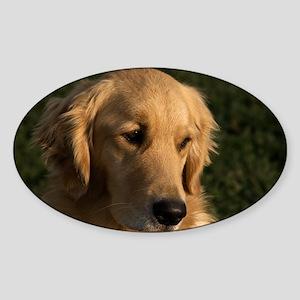 (2) golden retriever head shot Sticker (Oval)