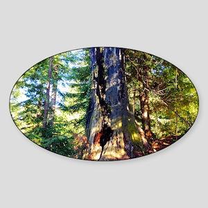 Redwood Forest Sticker (Oval)