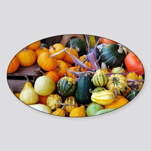 Display of squashes and pumpkins Sticker (Oval)