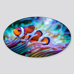 Clownfish Sticker (Oval)