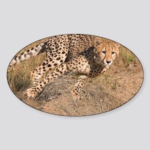 Cheetah On The Move Sticker (Oval)