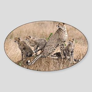Cheetah Family Sticker (Oval)