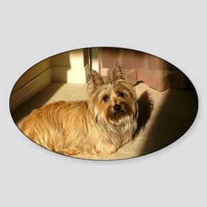 cairn terrier laying Sticker