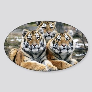 TIGERS Sticker (Oval)