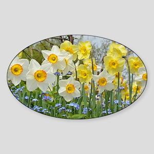 White and yellow daffodils Sticker