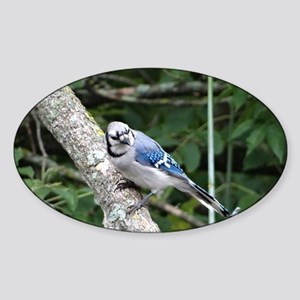 blue jay perched on a tree Sticker (Oval)