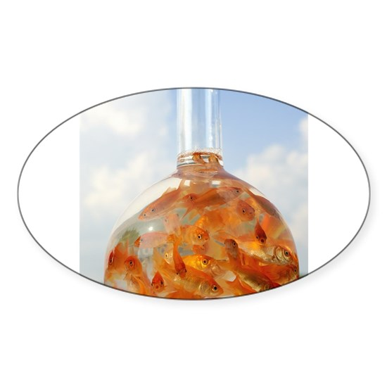 Many goldfish which are in the glass flask