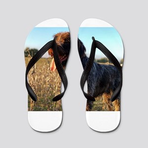 Wirehaired Pointing Griffon in Field 2 Flip Flops