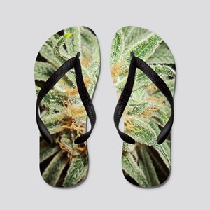 Cannabis Sativa Flower Flip Flops