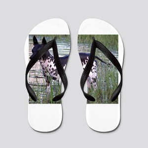american hairless terrier full Flip Flops