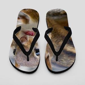 Funny Chipmunk Flip Flops