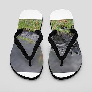 American Alligator, Everglades Flip Flops