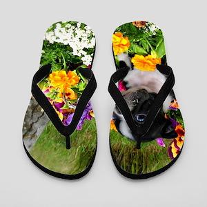 Boston Terrier puppy Flip Flops