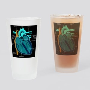 dr heart_diagram lr d Drinking Glass